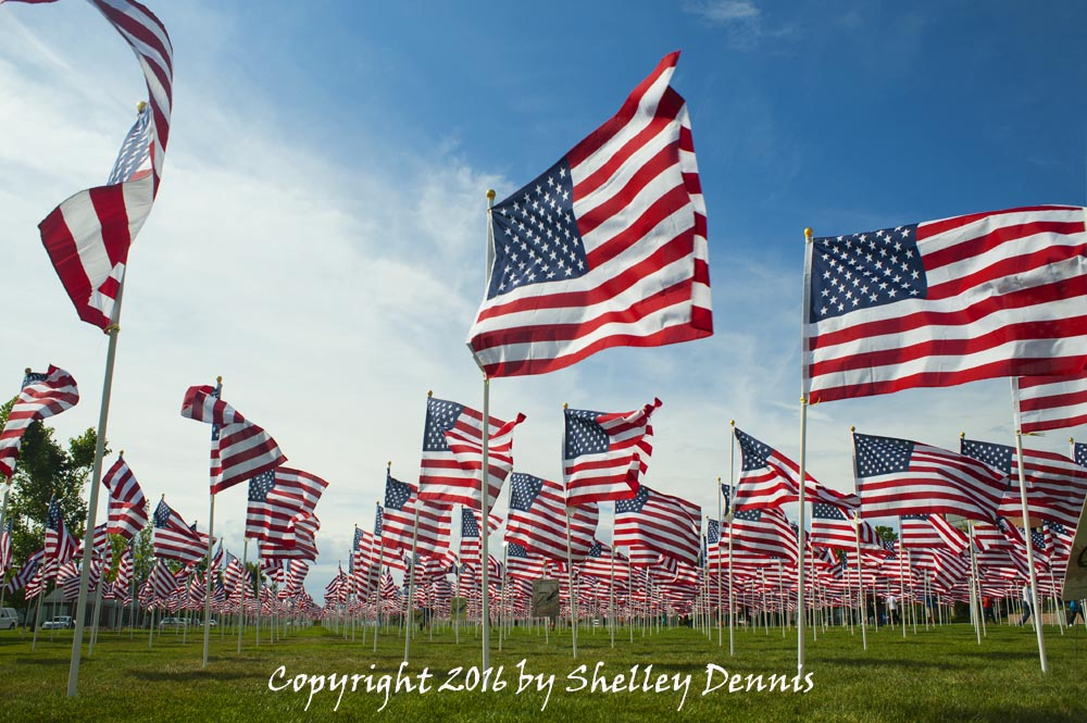 Field Full of Waving American Flags - Photo Tripping America